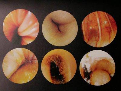 hybride anxiogène post humain visions du corps dans l art